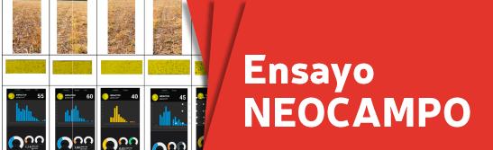 ENSAYO-NEOCAMPO